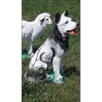Gerçek Gibi Siyah Beyaz Sibirya Alman Kurt Köpeği Tasarımlı İç ve Dışmekan 50cm Mermer Bahçe Heykeli